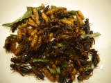 Food Friday – Fried Crickets