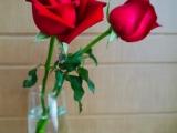 Monday Madness – Strawberry Love – valentinesmadness