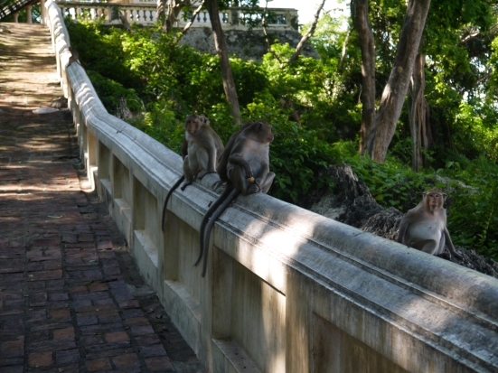 monkeys on the path