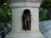 4 baby monkey phetchaburi
