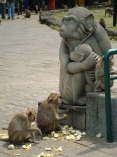 Monkeys at Phra Kahn Shrine