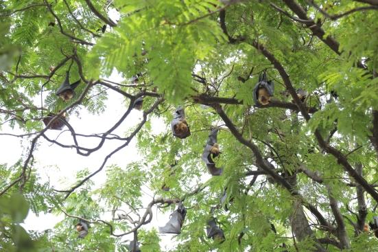 Bats Chachoengsao